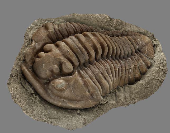 3d model Trilobite